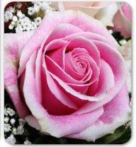 sony rose