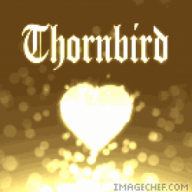 littlethornbird